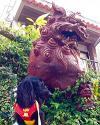 2016年02月25日<br>No.1609号<br>シーサーと番犬の最強コンビ!?
